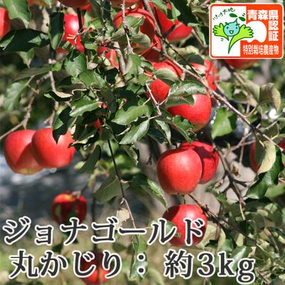 【送料無料】青森県産りんご ジョナゴールド 丸かじり(小さめサイズ)  約3kg(11-13個入) 青森県特別栽培農産物認証あり