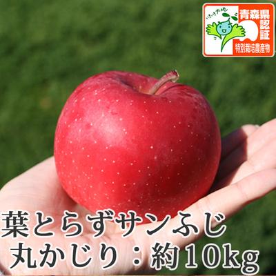 【送料無料】青森県産りんご 葉とらずサンふじ 丸かじり(小さめサイズ)  約10kg(40-56個入) 青森県特別栽培農産物認証あり