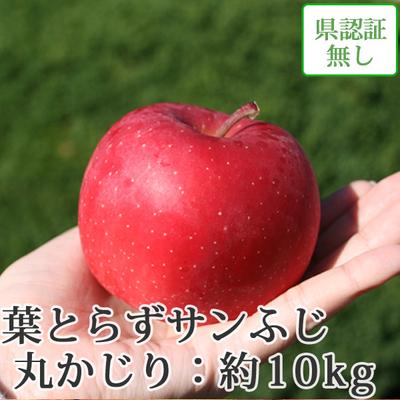 【送料無料】青森県産りんご 葉とらずサンふじ 丸かじり(小さめサイズ)  約10kg(40-56個入) 認証なし