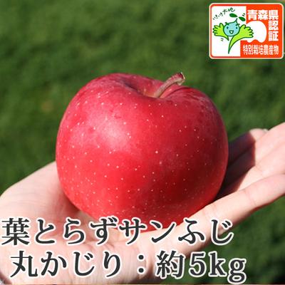 【送料無料】青森県産りんご 葉とらずサンふじ 丸かじり(小さめサイズ)  約5kg(20-28個入) 青森県特別栽培農産物認証あり