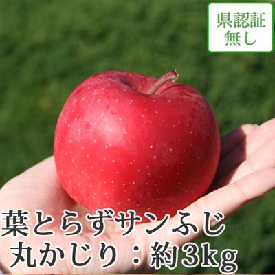 【送料無料】青森県産りんご 葉とらずサンふじ 丸かじり(小さめサイズ)  約3kg(11-13個入) 認証なし