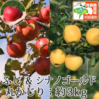【送料無料】青森県産りんご シナノゴールド&葉とらずサンふじ 詰合せ 丸かじり(小さめサイズ)  約3kg(11-13個入) 青森県特別栽培農産物認証あり