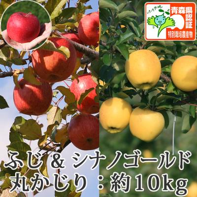 【送料無料】青森県産りんご シナノゴールド&葉とらずサンふじ 詰合せ 丸かじり(小さめサイズ)  約10kg(40-56個入) 青森県特別栽培農産物認証あり