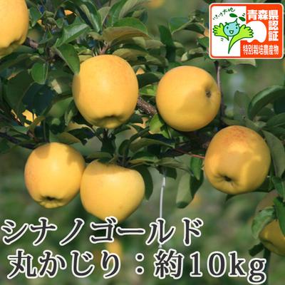 【送料無料】青森県産りんご シナノゴールド 丸かじり(小さめサイズ)  約10kg(40-56個入) 青森県特別栽培農産物認証あり