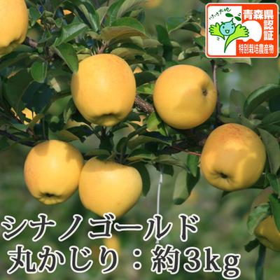 【送料無料】青森県産りんご シナノゴールド 丸かじり(小さめサイズ)  約3kg(11-13個入) 青森県特別栽培農産物認証あり