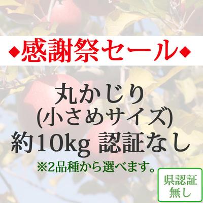 【感謝祭セール】青森県産りんご 丸かじり(小さめサイズ)  約10kg(40-56個入)認証なし