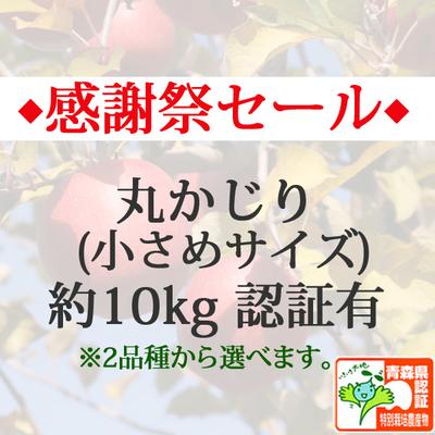 【感謝祭セール】青森県産りんご 丸かじり(小さめサイズ)  約10kg(40-56個入) 青森県特別栽培農産物認証あり