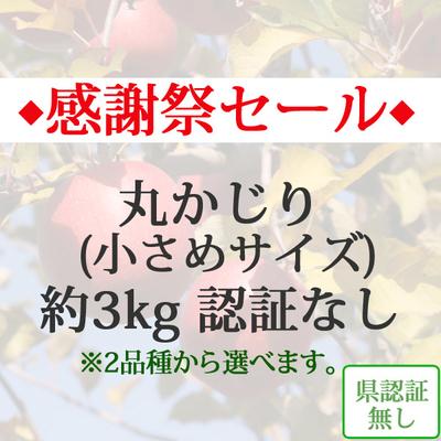 【感謝祭セール】青森県産りんご 丸かじり(小さめサイズ)  約3kg(11-13個入)認証なし