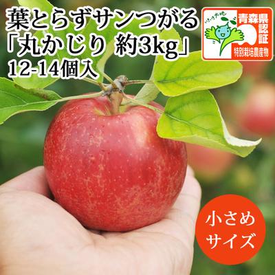 【送料無料】青森県産りんご 葉とらずサンつがる 丸かじり(小玉サイズ)  約3kg(12-14個入) 青森県特別栽培農産物認証
