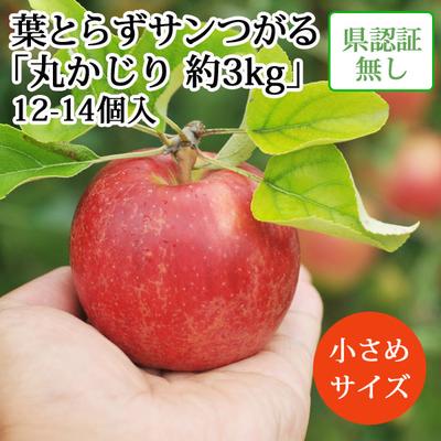 【送料無料】青森県産りんご 葉とらずサンつがる 丸かじり(小玉サイズ)  約3kg(12-14個入) 認証なし