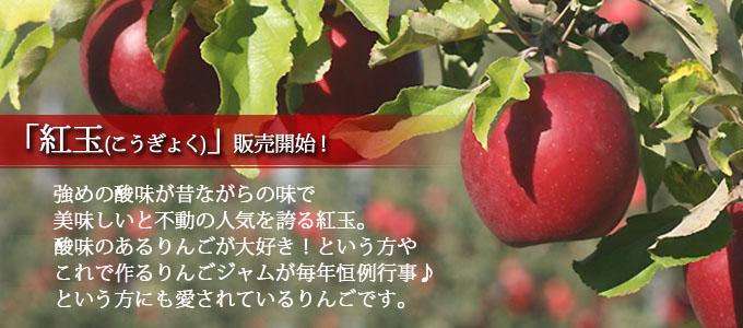 青森県産 酸味が美味しい 紅玉 こうぎょく