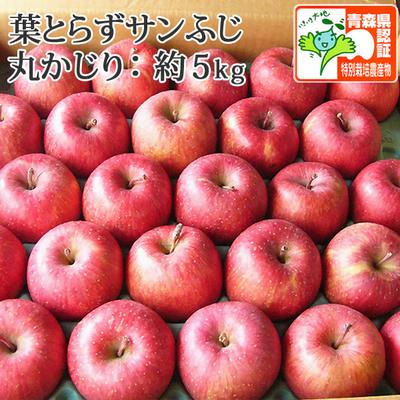 【送料無料】青森県産りんご 葉とらずサンふじ 丸かじり(小さめサイズ) 約5kg(23-28個入) 認証有