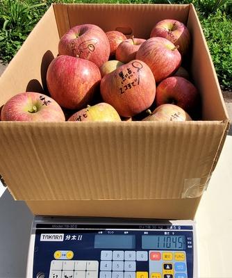 ありのままの果実シリーズ りんご(サンふじ)10kg