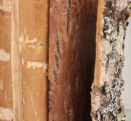 御岳百草丸はこのオウバクエキスを主体としています。