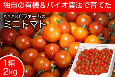 ミニトマト1箱2kg入【AYAKOファーム】