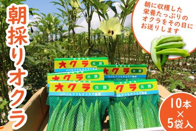 朝採りオクラ10本×5袋入【うーぞの農園】