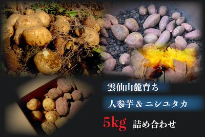 人参芋・じゃがいもミックス箱5kg【うーぞの農園】