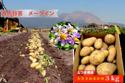 春馬鈴薯(メークイン)3kg【うーぞの農園】