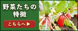 江戸川極み野菜の野菜たちの特徴とは