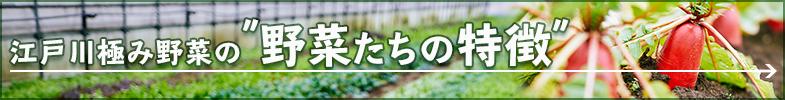 江戸川極み野菜の野菜たちの特徴