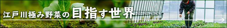 江戸川極み野菜の目指す世界