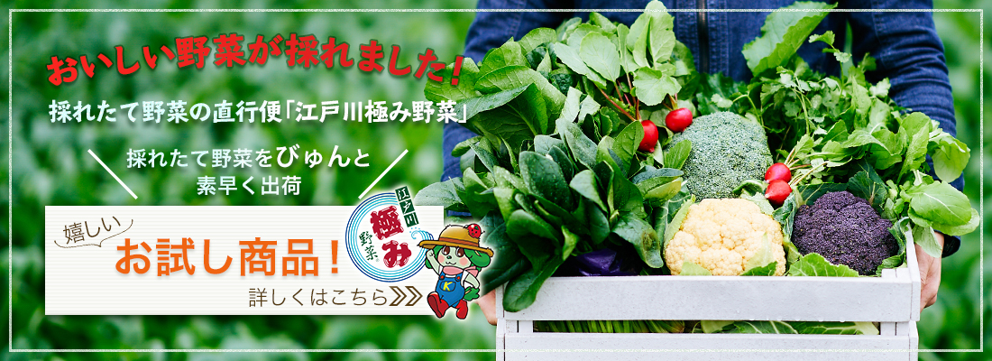 採れたて野菜の直行便、江戸川極み野菜
