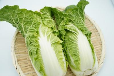 【期間商品】有機質肥料で育てたやわらかミニ白菜「わわ菜」2個