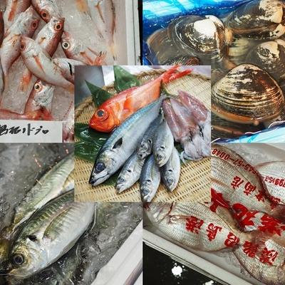 飲食店様向け・業務用鮮魚セット【水産物応援・送料無料】