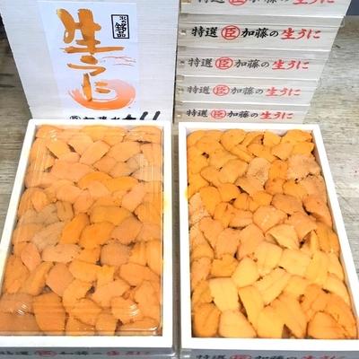 エゾバフンウニ(弁当箱・A品・バラ)約250g入り 北海道またはロシア産
