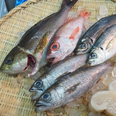 内容おまかせ!豊洲市場直送 鮮魚セット(4種以上・豪華版)