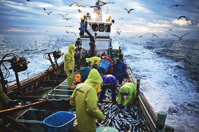 新型コロナウイルス時代でも漁師は漁に出るが、軒並み取引価格が低くなり困っている