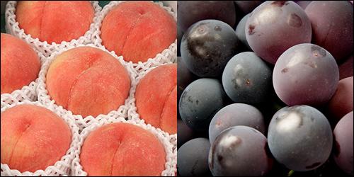 白桃&ぶどう「ピオーネ」1房(計 約2kg)