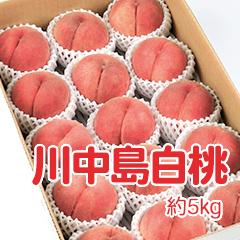 M-5 川中島白桃 約5kg