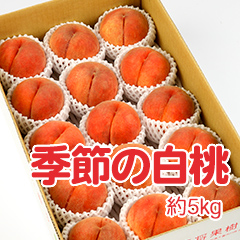 M-3 季節の白桃 約5kg
