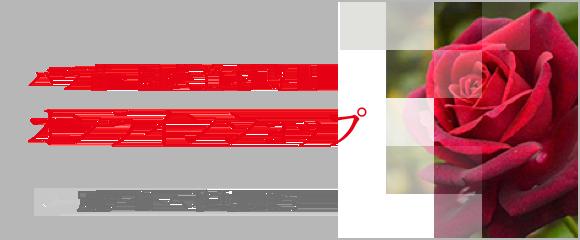 バラ苗・園芸資材専門オンラインショップ
