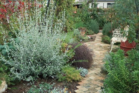写真:ガーデンの風景
