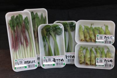 促成山菜セット(おまかせ4種×各2パック)