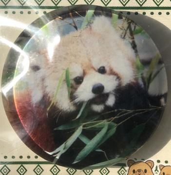 ガラスマグネット レッサーパンダ