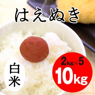 はえぬき 白米【10kg】