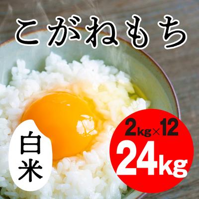 こがねもち 白米【24kg】