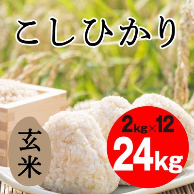こしひかり 玄米【24kg】