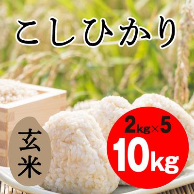 こしひかり 玄米【10kg】