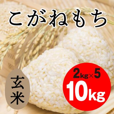 こがねもち 玄米【10kg】