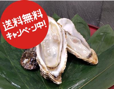 〈水産物応援商品〉宮城県石巻市桃浦産 牡蠣(加熱用)