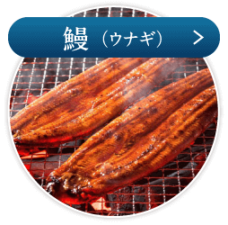 鰻(ウナギ)