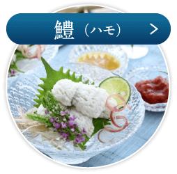 鱧(ハモ)