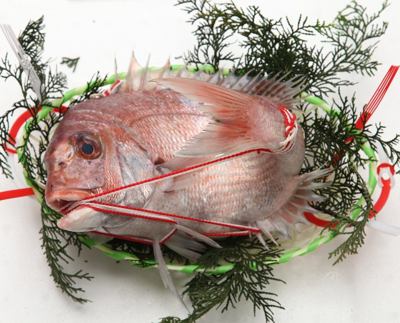 活〆 天然 真鯛 尾頭付き 紅白紐かけ