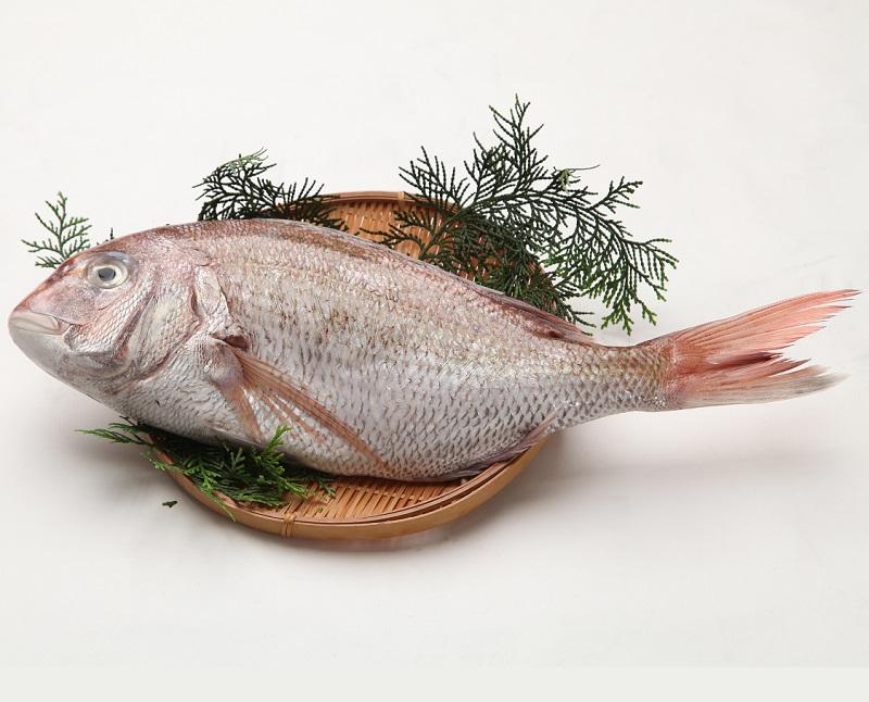 活〆 天然 真鯛 ウロコ取り真空パック(原体約800~1k)