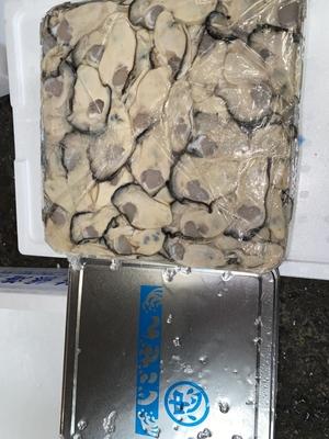 地御前牡蠣(加熱用)500g