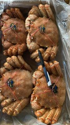 北海道産 ボイル毛蟹 1kg